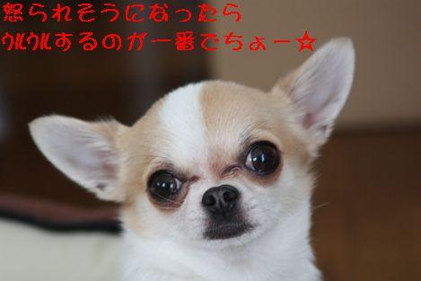 IMG_26840.jpg