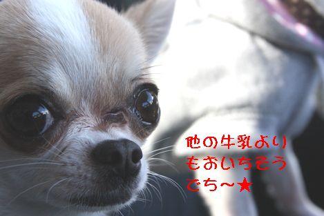 IMG_31640.jpg