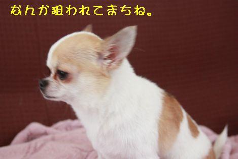 IMG_3246.jpg