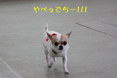 IMG_3293.jpg