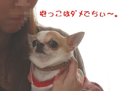IMG_3720.jpg