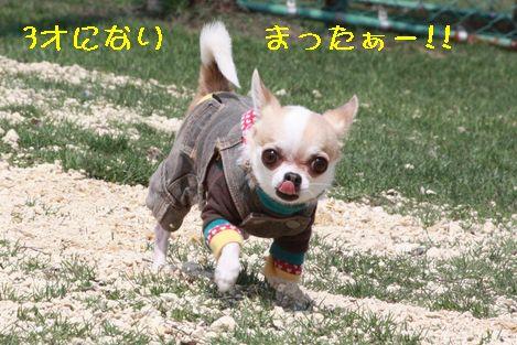IMG_40420.jpg