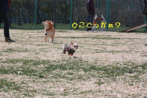IMG_4068.jpg