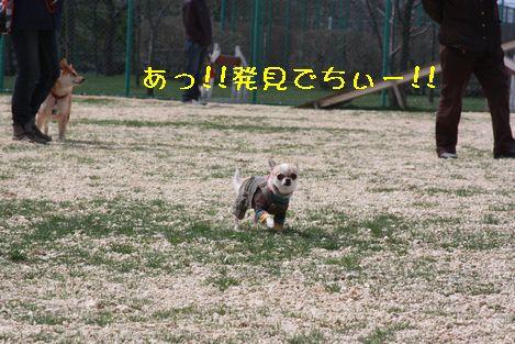 IMG_4070.jpg