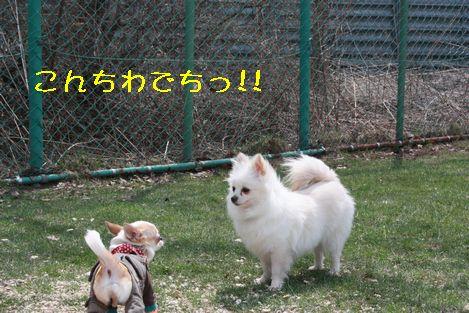 IMG_4094.jpg