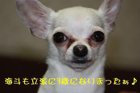 IMG_4216.jpg