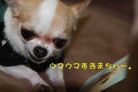 IMG_4247.jpg