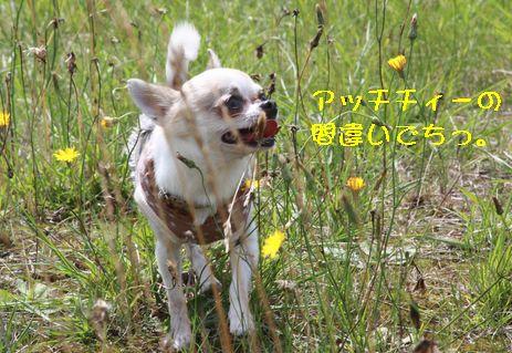 IMG_75580.jpg