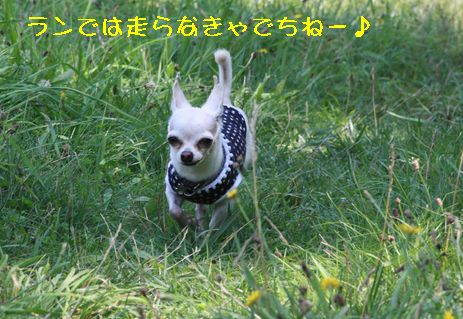 IMG_7687.jpg
