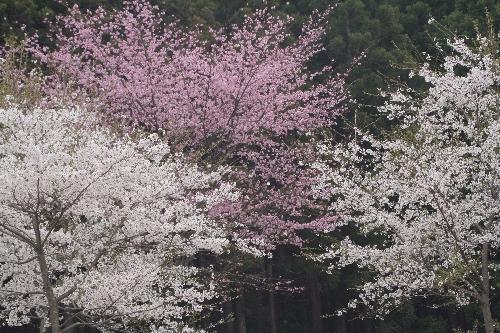 keyaki-002126s.jpg