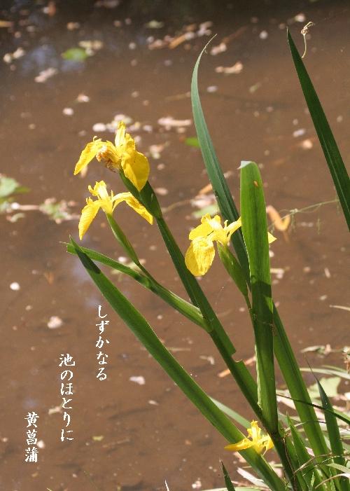 keyaki-002255s.jpg