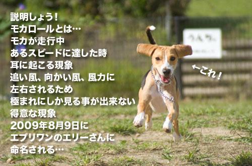 _NKS1535_20090915153315.jpg