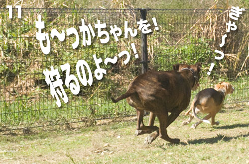 _NKS2598.jpg
