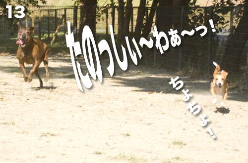 _NKS2601.jpg