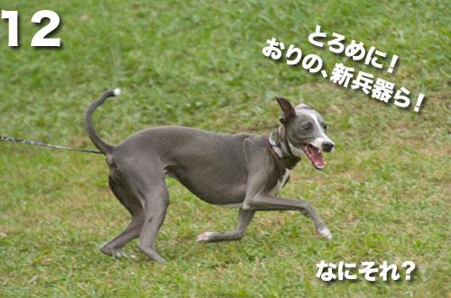 _NKS3094.jpg