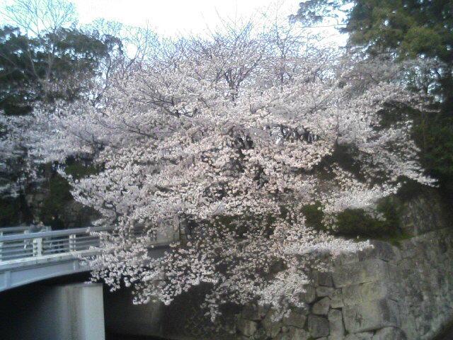 駿府公園TS330034