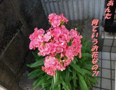 DSC_0014_20090712144425.jpg