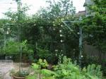 ミトンさんのお庭1