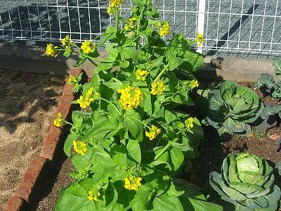 庭野菜1H21.3