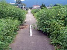 加越能鉄道加越線跡、焼野駅辺り。