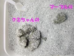 オシッコの比較。クミちゃんの圧勝。