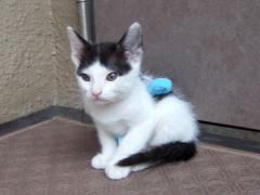 マーちゃん。きれいな猫になったね。