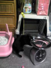 チャコちゃんコーナー。キャリー、体重計、トイレ。