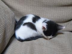 みーちゃん、ソファで爆睡。
