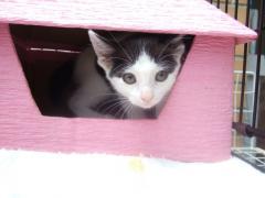 よく遊んだね。思い出の猫ハウス。