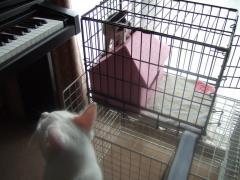 よく遊んだ猫ハウス@遊び部屋。