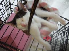 手足を伸ばして爆睡。