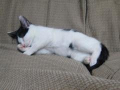 ソファで爆睡。なにげにおもしろい寝姿。