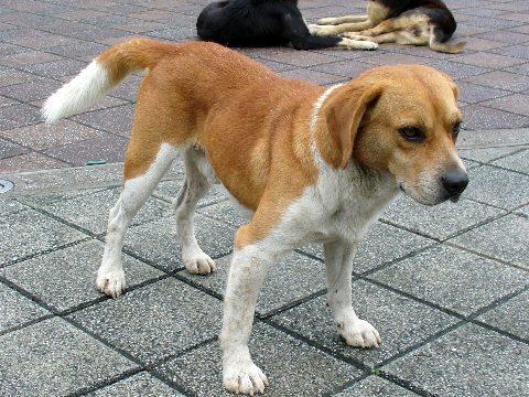 瑞芳駅前の広場にいた犬