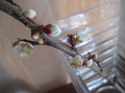 梅小枝-2
