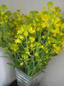 菜の花-2