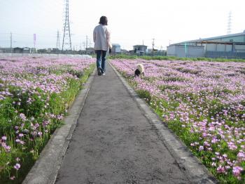 れんげ畑散歩中