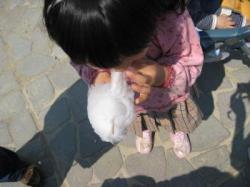 綿菓子01