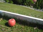 牧場りんご