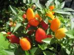 クレヨン植物