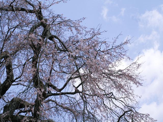 2008年04月01日_PICT0092