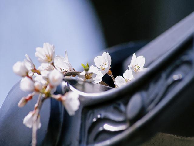 2008年04月01日_PICT0080