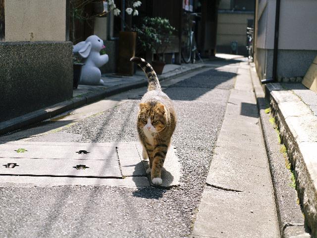 2008年04月06日_PICT0129
