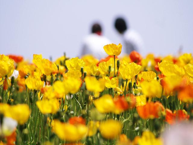 2008年05月03日_PICT0100