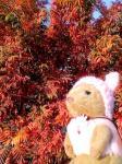 051203yo_momiji_s.jpg