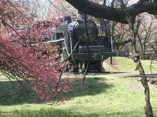 桜と蒸気機関車