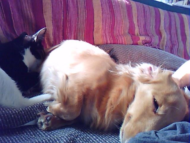 愛は仔猫も救う