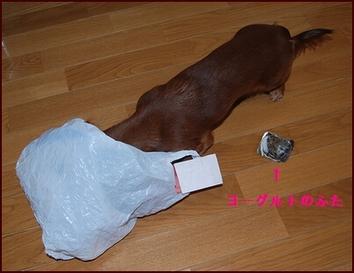 ゴミ漁り犬