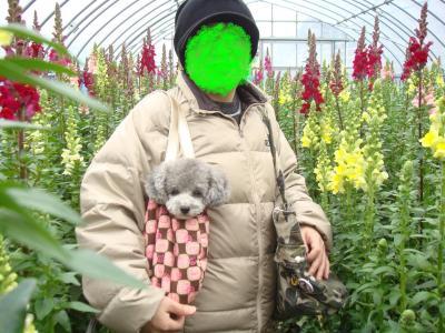 お花摘み1