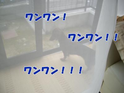 IMGP5385_convert_20081106180101.jpg