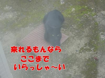 IMGP5386_convert_20081106180125.jpg